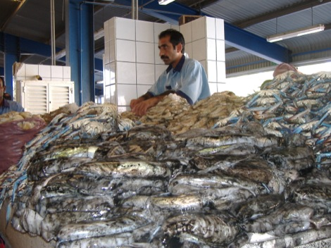 Mountain of fish.jpg