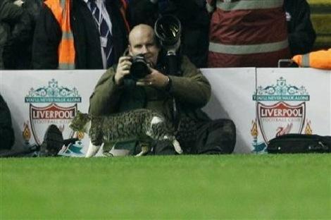 anfield-cat2