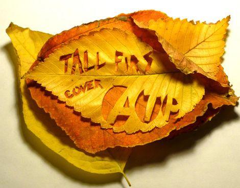 atp-tall-firs.jpg