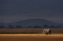 Elephant in ray of light fine-art print
