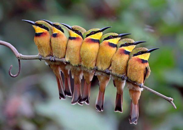 best-bird-photos-2012-little-bee-eaters_56461_600x450
