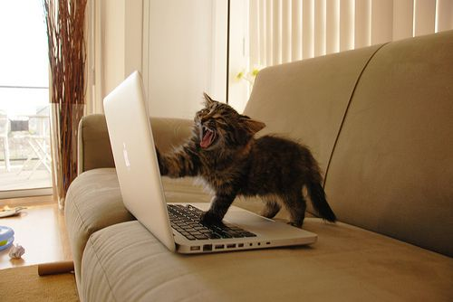 cat laptop