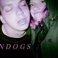 Sundogs