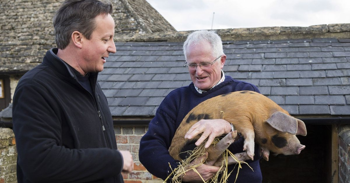 """I did not have sexual relations with that pig"""